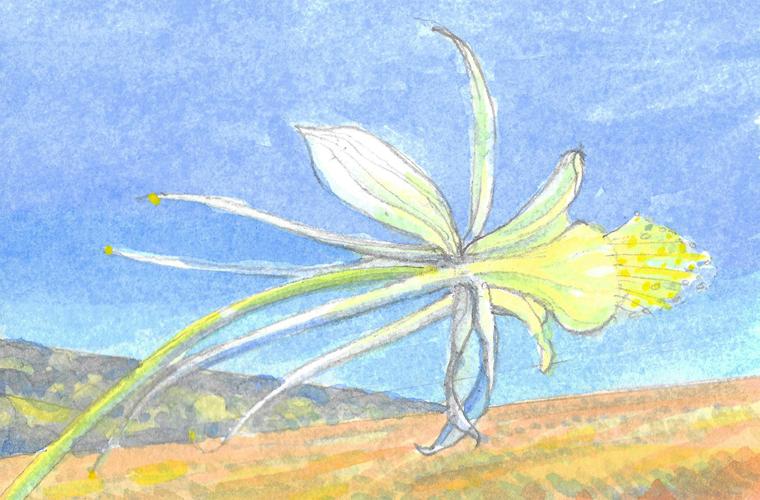 Celebrating Nature 1 (Columbine). Watercolour. 15x10cm