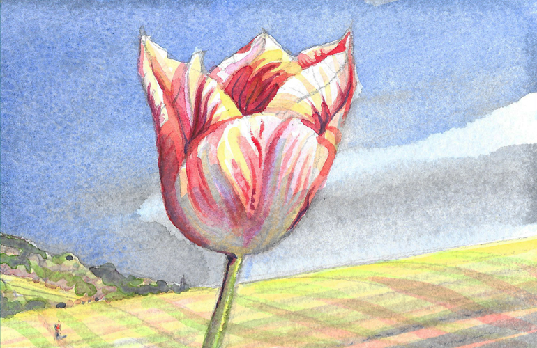 Celebrating Nature 3 (Prince Carnival Tulip). Watercolour. 15x10cm